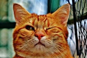 cat beam